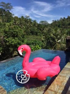 Big Beak Flaminggo